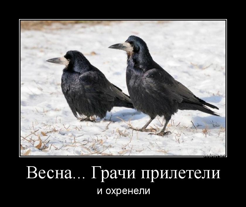 Смешные картинки грачи прилетели
