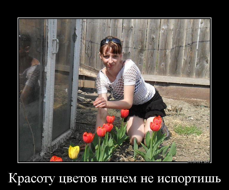 невесты хочу цветы демотиваторы кубани злоумышленник