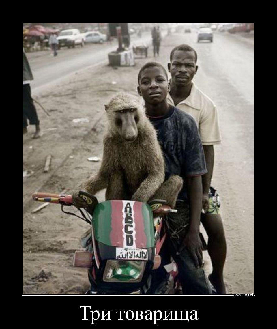 Фото с неграми обезьянами 3 фотография