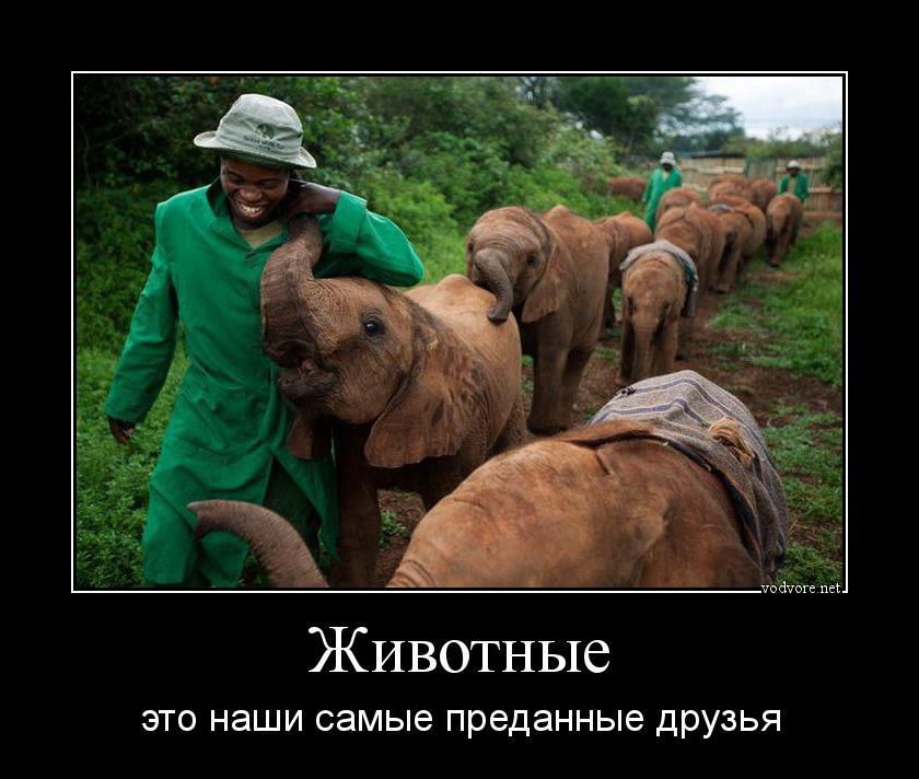 Демотиваторы животные работа