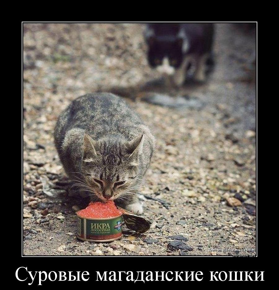cr_421728855266938551582.jpg