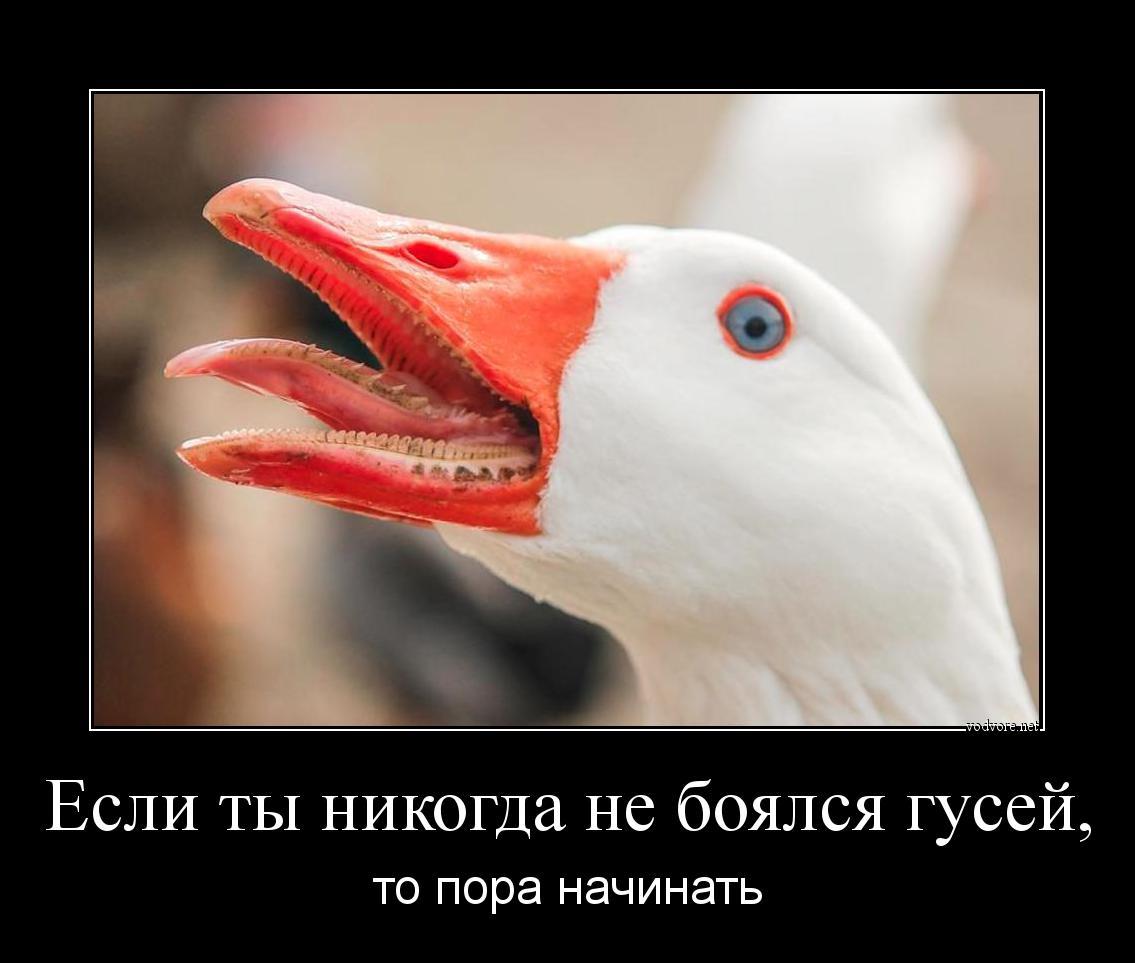 скачиваются файлы есть ли зубы у утки всё