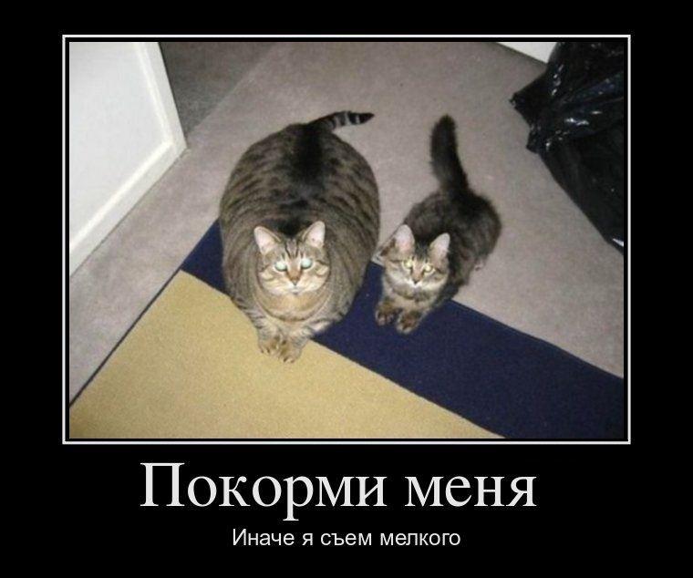 http://vodvore.net/demotivators/demot01529.jpg