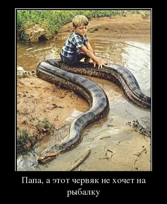 Увидеть девятку червей на дороге