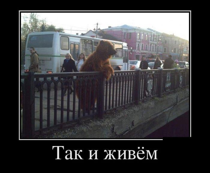 Медведь устроил погром в одном из торговых центров Хабаровска