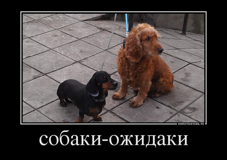 хочу собаку демотиватор сладостями
