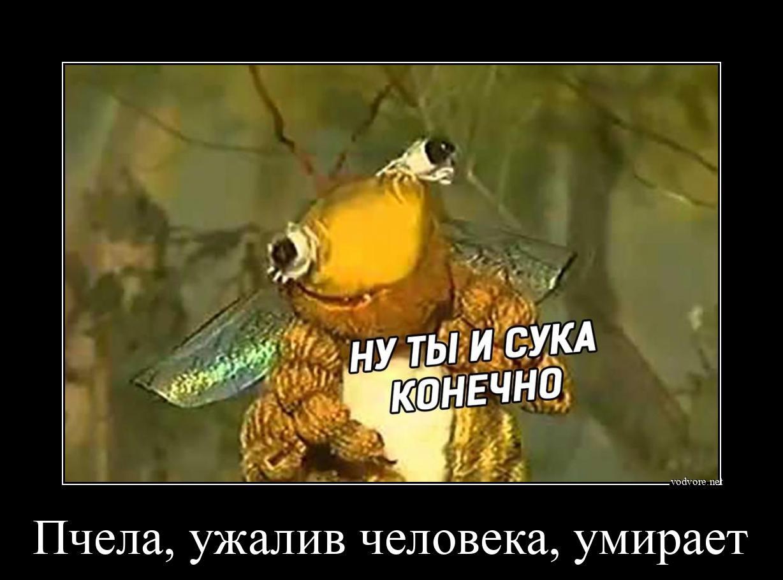 Демотиватор с пчелой