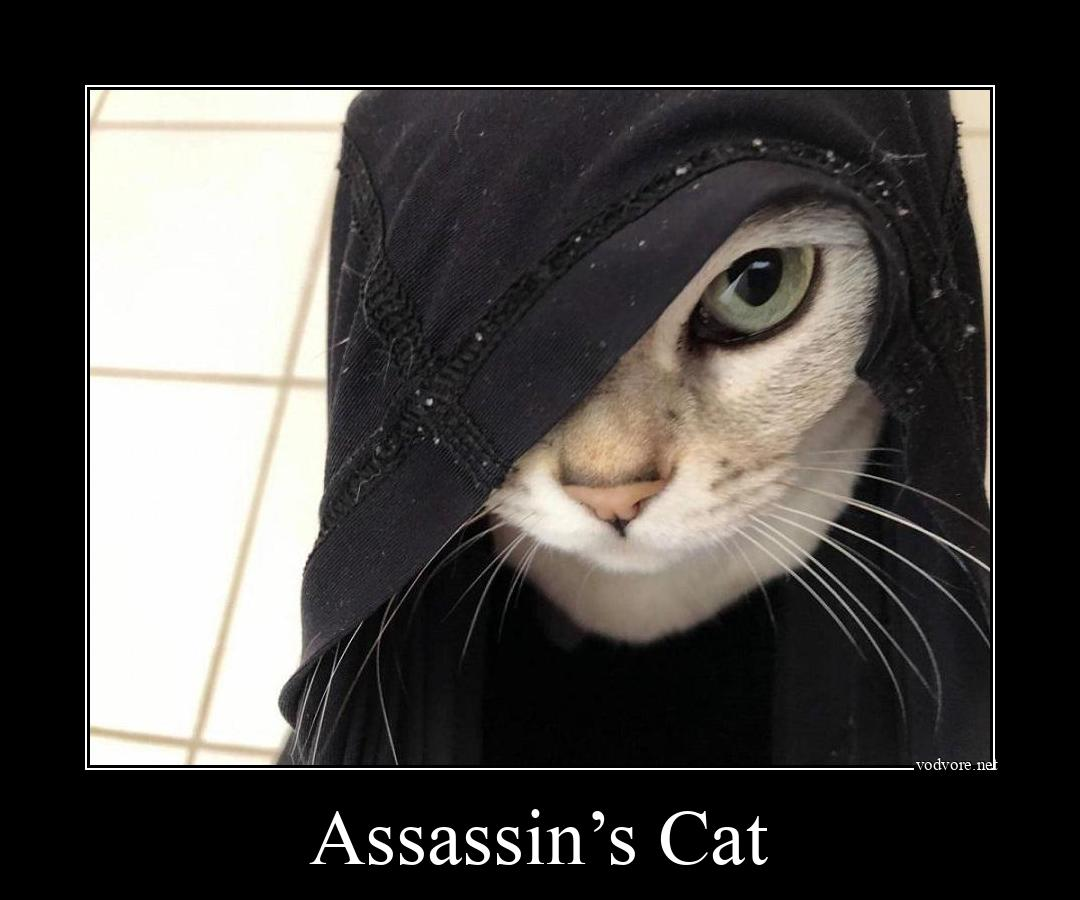 Демотиватор: Assassin's Cat