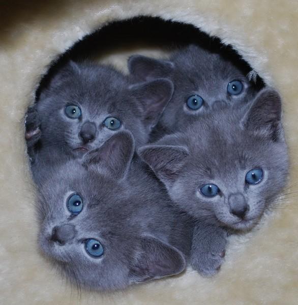 Прикол рождение котят