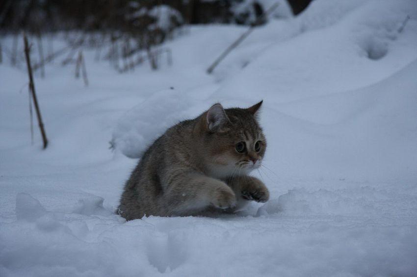 или, опять зима картинки приколы хоть один