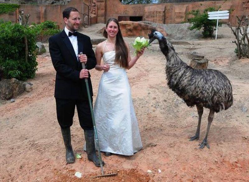 Картинки по запросу свадьба в зоопарке