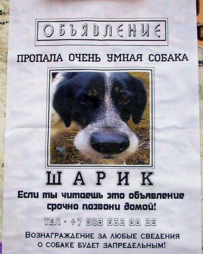 Прикольная картинка пропала собака