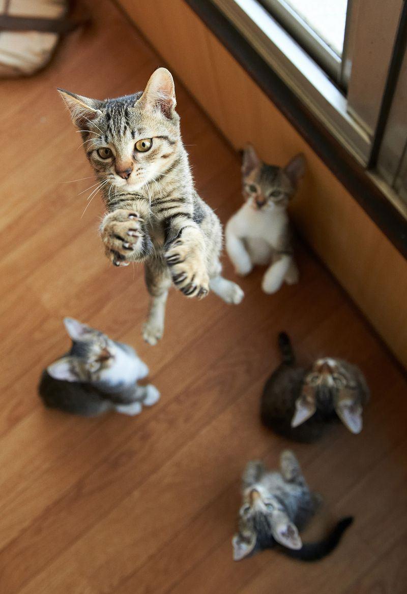 Приколы фото кошки 23 фотография