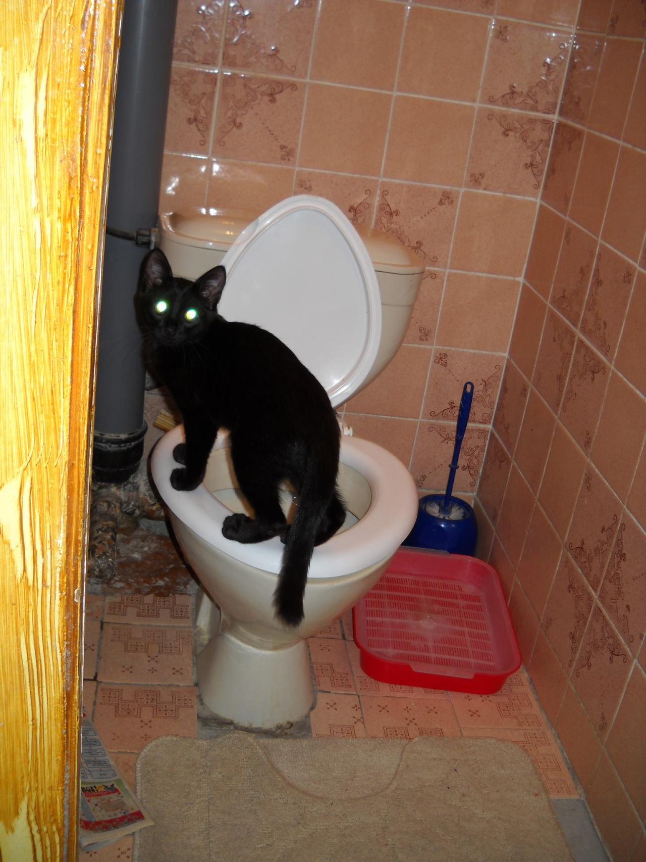 Не хожу в туалет по большому 2 недели что делать