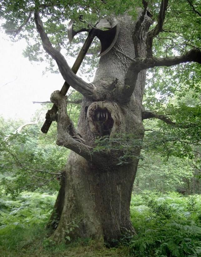 Дерево прикол картинка